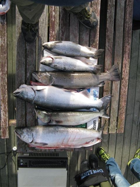 Rakaia_8_salmon